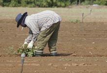 ייצוגית: סטודנטים לחקלאות מאסיה ואפריקה מועסקים בישראל ככוח עבודה זול