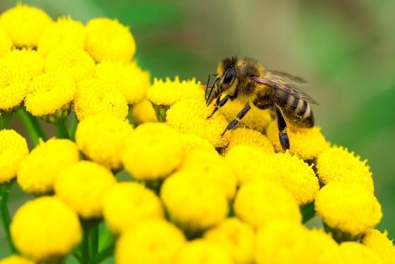 תביעה קטנה: מה הפיצוי למשפחה שחלקה בקתת נופש עם קן דבורים?