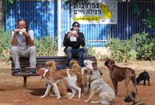 בעלת פנסיון לכלבים תפצה על מות כלבה מחסימת מעיים בשל אכילת חפצים זרים
