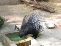 צייד סדרתי של חיות בר ברמת הגולן יכלא ל-7 חודשים ונקנס ב-20 אלף שקל
