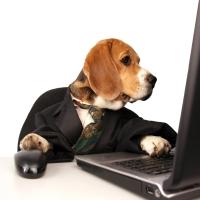 כלב או עורך דין? הסלנג של החשוד עלה לו בזכות ההיוועצות בחקירה