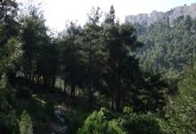 יער ירושלים באזור נחל רבידה. צילום: דרור פייטלסון